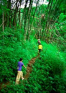 People hiking through woods on dirt trail