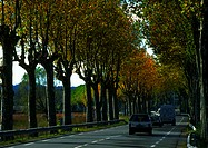 Cars on road lined with trees