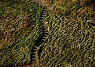 Old steps in grassy hill (thumbnail)