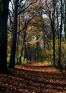 Path through woods in autumn