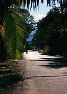 Reunion, road with hanging palm fronds