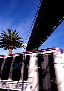 California, San Francisco, bus with palm tree in background, under bridge