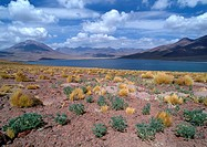 Chile, El Norte Grande, arid landscape with mountains and small lake