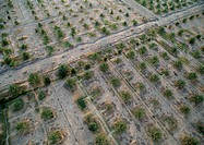 Tunisia, Palm orchard, aerial view