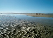 New Zealand, shore with rippled sand and pool of water