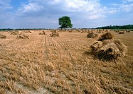 France, Loire Valley, haystacks in field