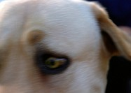 Dogs eye, blurry, close-up