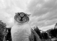 Cat´s face, black and white, low angle view