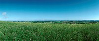 France, grassy field, panoramic view