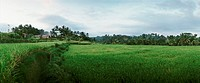 Indonesia, field, panoramic view