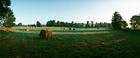 France, bales of hay in grassy field, panoramic view
