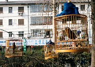 China, Beijing, caged birds in street
