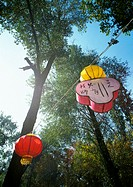 Chinese lanterns fastened to rope under trees, low angle view