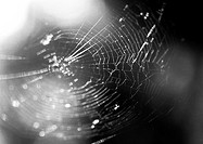 Spider web, close-up, b&w