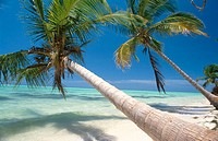 Beach. Punta Cana. Dominican Republic. West Indies. Caribbean