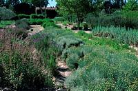 Herb garden, Graveson Perfume Museum