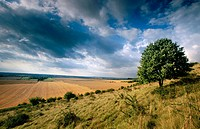 Ivinghoe Hills in august. Buckinghamshire, UK