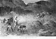 Killing a lioness, drawing by E. Bayard. Engraving from 'Le tour du monde'