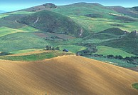 10649805, field, fields, hills, Italy, Europe, scenery, agriculture, Sicily, tractor, wine, vineyard