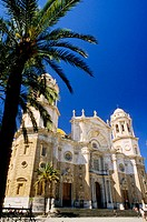 Cathedral facade and palm tree at fore. Cádiz, Spain