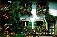 SG A, Architektur, Häuser, Bauernhäuser, Haus mit Lüftlmalerei und Blumenkästen,  Geranien, Petunien und grüne Fensterläden, Bad Aibling, Bayern, BRD ...