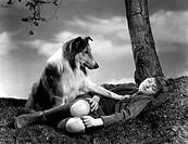 Film, ´Heimweh - Lassie come home´, USA 1943, Regie: Fred M. Wilcox, Szene mit: Roddy Mc Dowall & Lassie,  liegend, kniestrümpfe, wiese, baum, hund be...