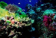 Zoologie, Nesseltiere, Korallenriff, verschiedene Korallen und Federsterne mit vielen bunten Fischen,  koralle federstern haarstern haarsterne fische ...
