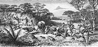 Fischer, Gustav Adolf, 3.3.1848 - 11.11.1886, deut. Afrikareisender, Reise 1882, die Karawane wird von einem Nashorn angegriffen, Xylografie  1885  Af...