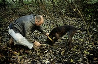 Truffle hunting with dogs in Piedmont