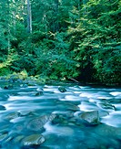 Breitenbush River. Willamette National Forest. Marion County. Oregon. USA