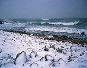 Beach, sea, stones, snow, coast, landscape, nature, season, winters, snow-covered, cold, drily, water weathers waves, weathers, weather, stormily, sto...