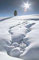 Snow covered landscape. Yellowstone National Park. Wyoming. USA