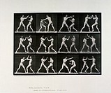 Nude male athletes boxing, c 1872-1885.Plate 336 from Muybridge´s ´Animal Locomotion´ (1887). Eadweard Muybridge (1830-1904) was the first photographe...