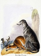Vignette from a lithographic plate showing a hunting dog with a deer. Taken from ´The Dog´ in ´Graphic Illustrations of Animals - showing their utilit...