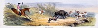 Vignette from a lithographic plate showing a hunter and his dogs chasing a wild boar. Taken from ´The Pig´ in ´Graphic Illustrations of Animals - show...