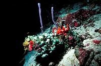 Colorful Undersea Plants