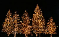 Christmas Tree Lights Outdoors