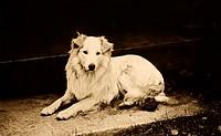 Dog On Porch
