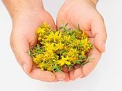 St. John´s Wort (Hypericum perforatum) flowers