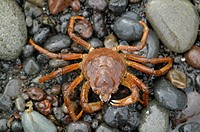 Close-Up of a crab on a beach