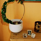 Potted plant on table with photos