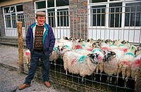 Man with sheep at Cahincueen market. Ring of Kerry, Co. Kerry, Ireland