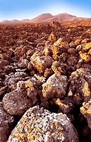 Volcanic landscape. Moss and lichen on volcanic rocks on the island of Lanzarote. The island is volcanic in origin, with volcanic cones seen on the ho...