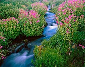 Creek. Mt. Rainier National Park. Washington. USA