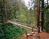 Drift Creek Falls Suspension Bridge. Oregon. USA