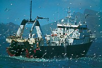 Fishing Trawler Followed by a Large Flock of Seagulls, St Kilda, Orkney Islands, Scotland
