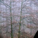 Alder Swamp (Alnus Glutinosa). Skane. Sweden