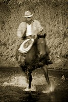 Cowboy riding through stream, Douglas Lake Ranch, British Columbia, Canada'