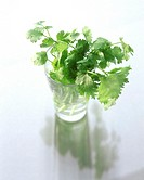 Coriander leaves in water glass