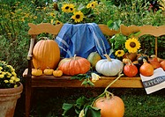 Pumpkin still life on wooden bench in country garden